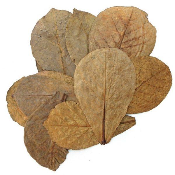 листя кетапанга купити київ україна