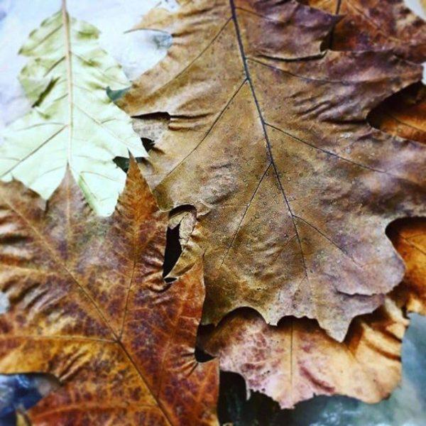 кондиціонер для акваріумний води листя дуба купити київ